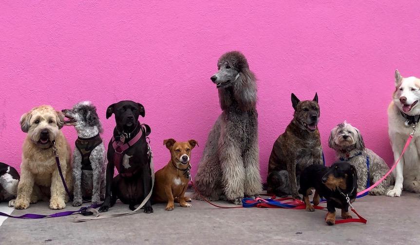 愛犬家なら1度は行くべき!大型ドッグイベント「代々木公園わんわんカーニバル」