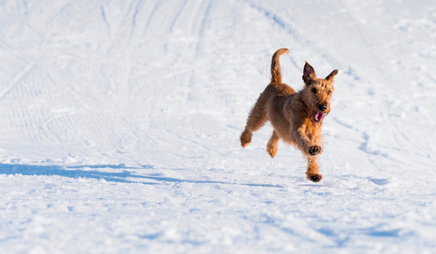 今年の冬は愛犬と雪遊び!ワンちゃんと楽しめる雪スポット5選!
