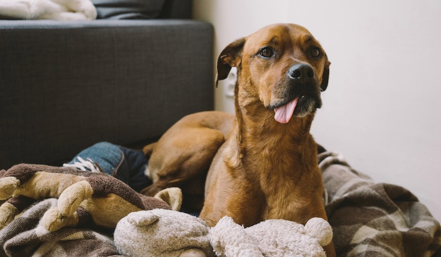 愛犬の素敵な住まいづくり!部屋の印象がガラッと変わるオシャレペットハウス3選!