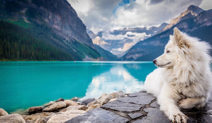 今年の冬はワンちゃんと一緒に!愛犬を同伴できる温泉宿はココ!